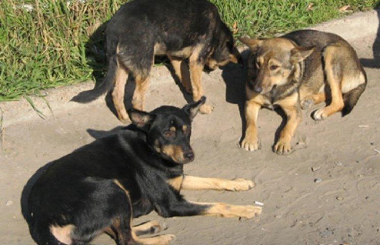 Бродячих собак Мелітополя перевезуть до Харкова