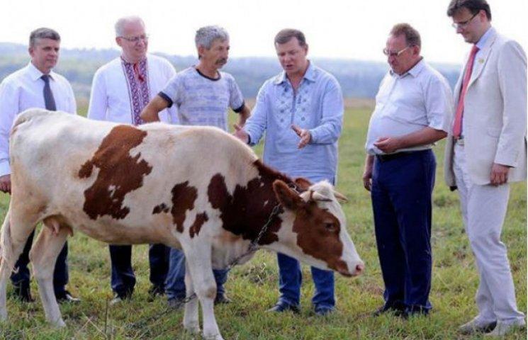 Как Ляшко пиарится на тощей корове (ФОТО)