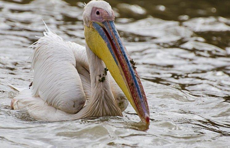 На Одещині знищують рідкісних птахів