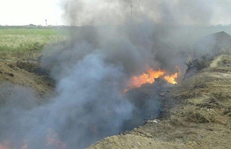 На Миколаївщині спалили 310 хворих на чуму свиней