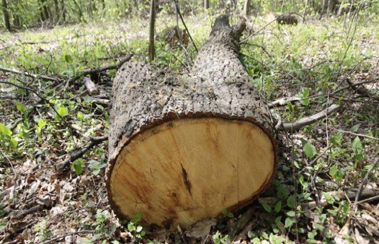 """Тільки в одному з лісгоспів Хмельниччини """"нарубали"""" більше 2 мільйонів гривень"""
