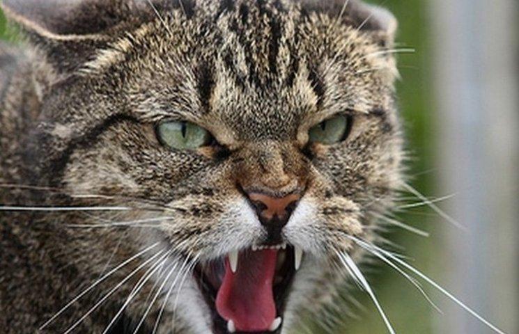 На Вінниччині скажений кіт покусав собаку і його господаря