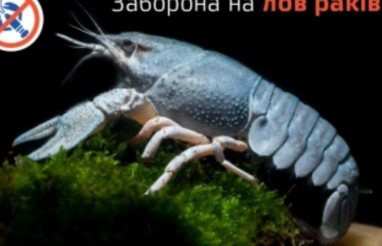 На Миколаївщині через літню линьку заборонили вилов раків