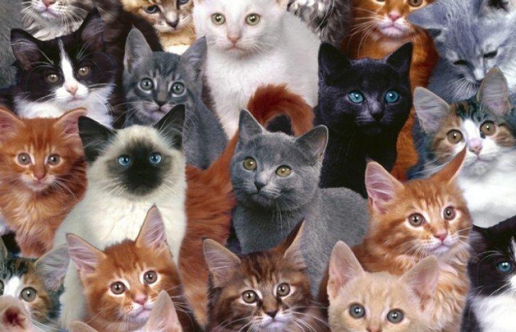 Кот-фельдшер и кот-музейщик: ТОП-5 усатых, которые не сидят, сложа лапы
