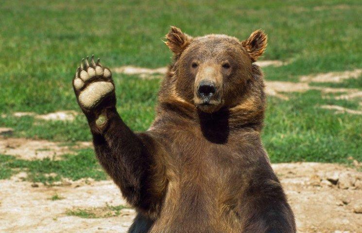 У США ведмідь проїхав на даху автівки 8 кілометрів
