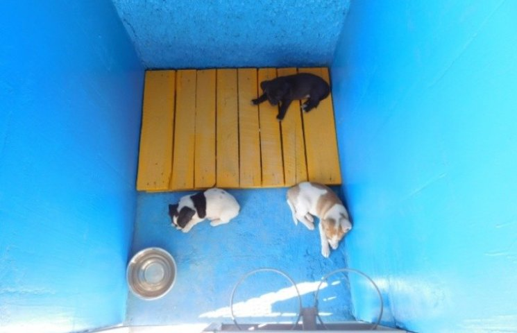 На Миколаївщині запускають ще один притулок для бродячих тварин