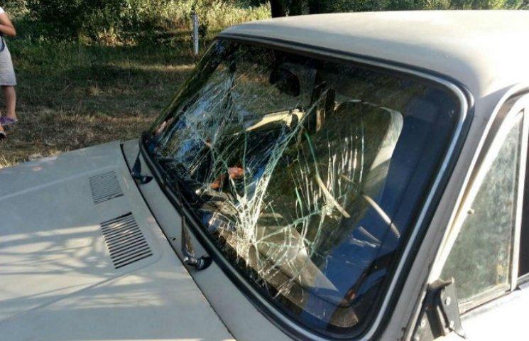 На Полтавщині автомобіль збив корову