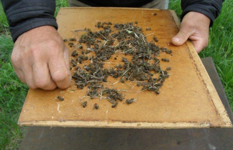 Пасічники Хмельниччини нарікають на вимирання бджолиних сімей