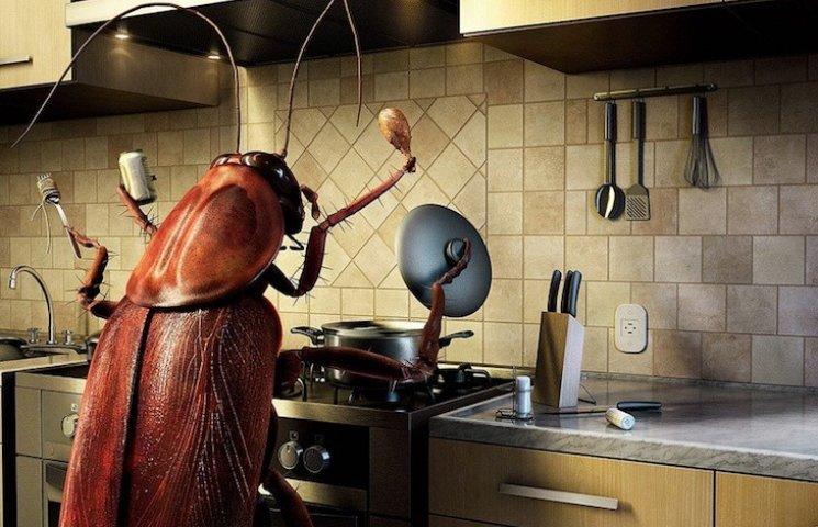 Комахи і павуки воліють жити у будинках багатіїв, - вчені