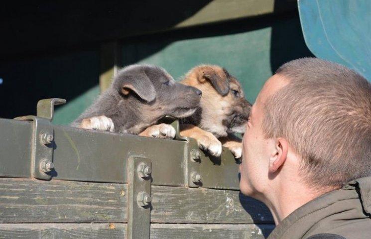 Чим займаються на Донбасі найкращі друзі бійців АТО - 6
