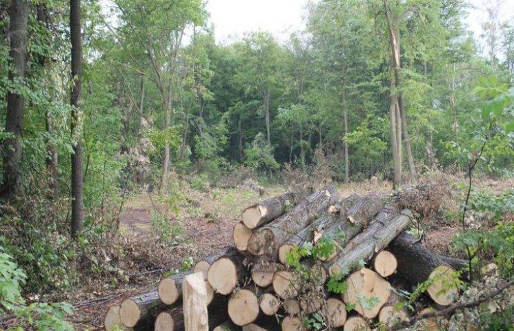 На Хмельниччині інвентеризували ліси
