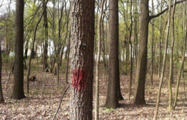 У Черкасах судитимуть посадовця, який подарував підприємцям 67 га лісу