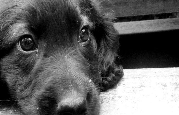 Черкаський садист підвішував свого пса за горло та безжально лупцював