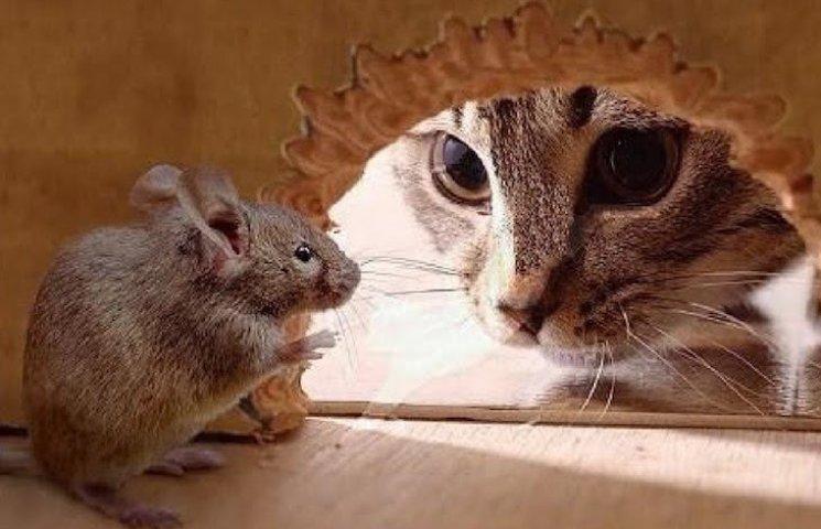 Кігтями і хитрістю : Як коти собі їжу добувають