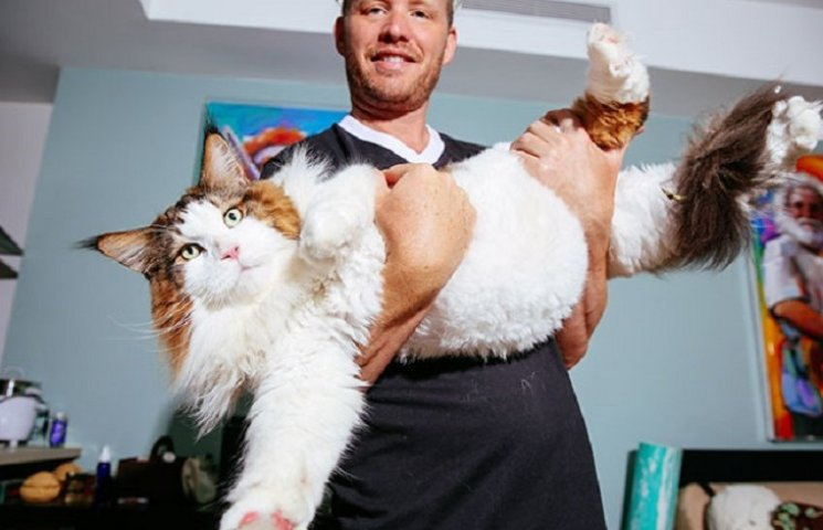 Найбільший кіт Нью-Йорка перевершить ваші очікування
