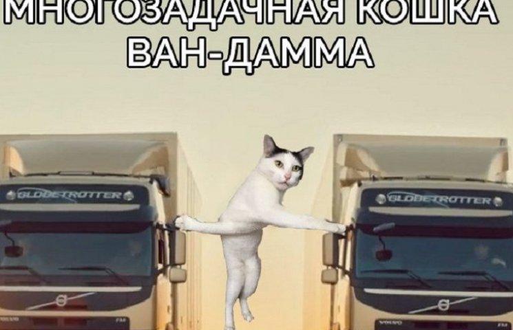 Как кошка, которая застряла между кроватью и ногтиточкой, стала героем фотожаб