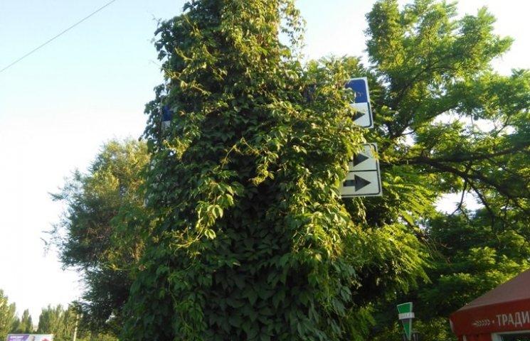 У Миколаєві ліани заплели дорожні знаки