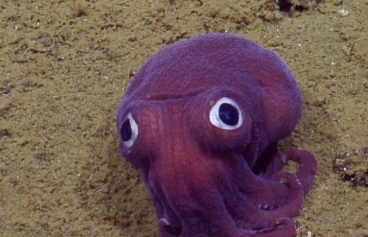 На дне океана нашли фиолетовое животное с большими глазами