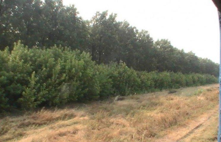На Миколаївщині у лісосмузі знайшли жінку з простреленою головою