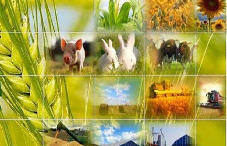 """Каждая область Украины имеет свои аграрные """"рекорды"""""""