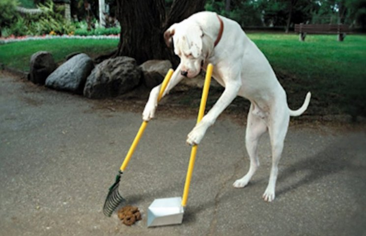 Тепер у Нетішині вигулювати собак можна лише у 5 місцях