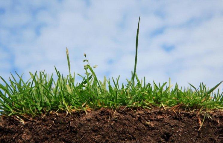 На Хмельниччині фермер незаконно мав 50 гектарів землі