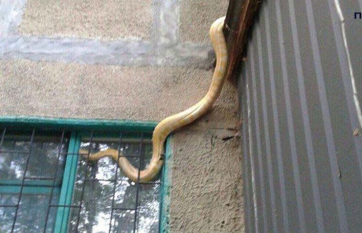 Як у Полтаві пітон пробирався у квартиру через вікно