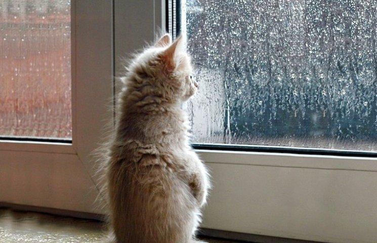 Погода у Черкасах на 24 серпня
