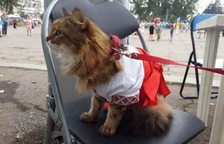 Кіт у вишиванці святкує День Незалежності у Запоріжжі