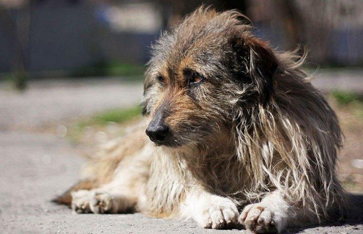 На Миколаївщині шкуродер на очах у дітей відстрелює дворових собак