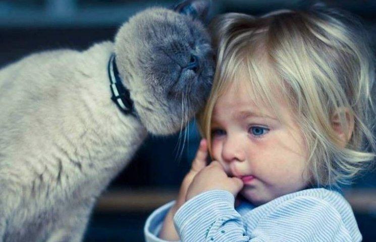 Брати наші менші: Як коти доглядають за малюками