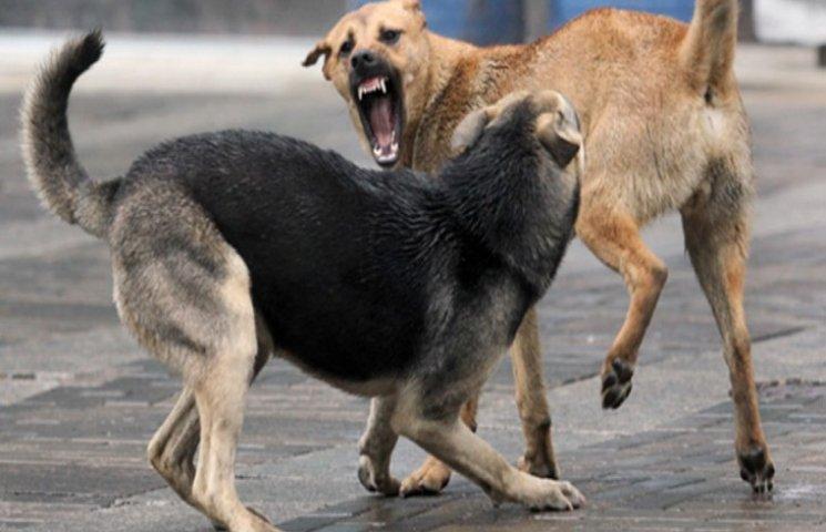 Славутчани потерпають від бродячих псів