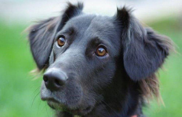 Специалисты доказали, что собаки умеют понимать слова