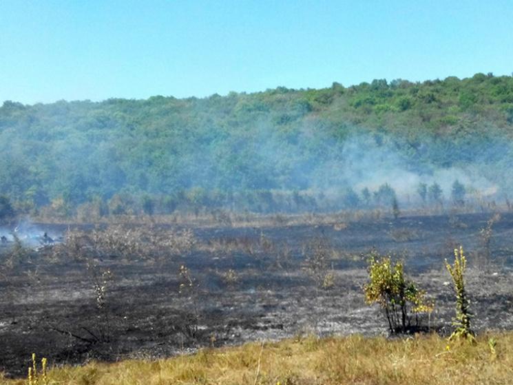 Під Полтавою сталася масштабна пожежа сухостою