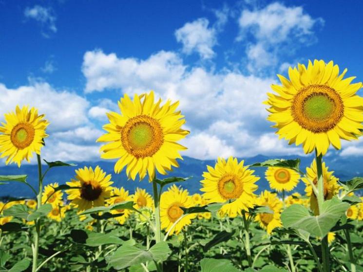 Ідеально для прогулянки: Що готує погода для Сумчан 11 серпня