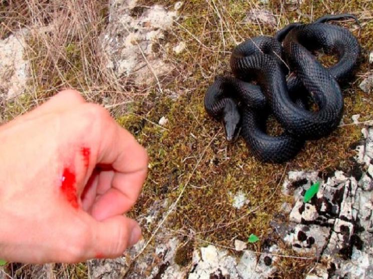 На Дніпропетровщині змії атакують людей