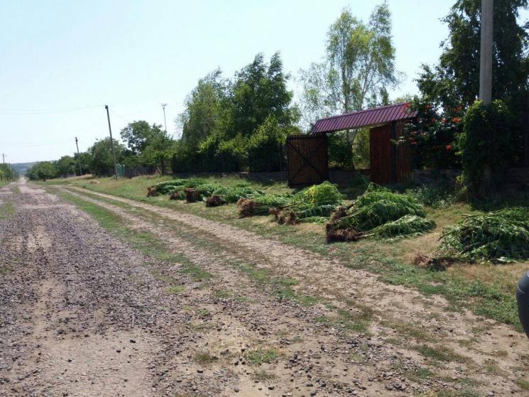 На Одещині та Миколаївщині діяла злочинна группа озброєних наркоділків