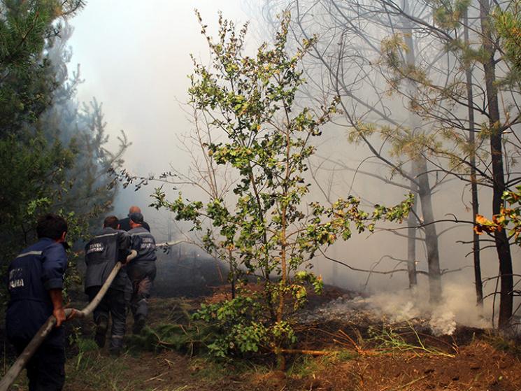 На Полтавщині вигоріло близько 22 га лісу