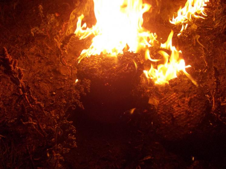 На Хмельниччині людей знову рятували від шершнів