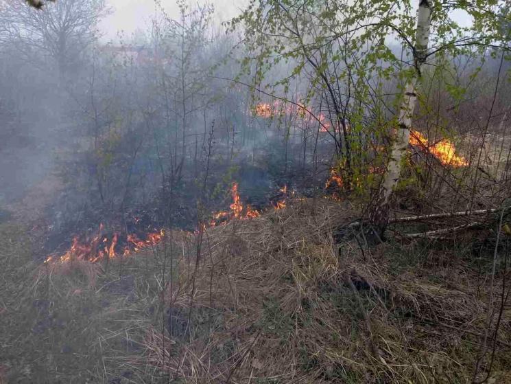 НаХарківщині спалахнув ліс: Догасіння можуть залучити гелікоптер