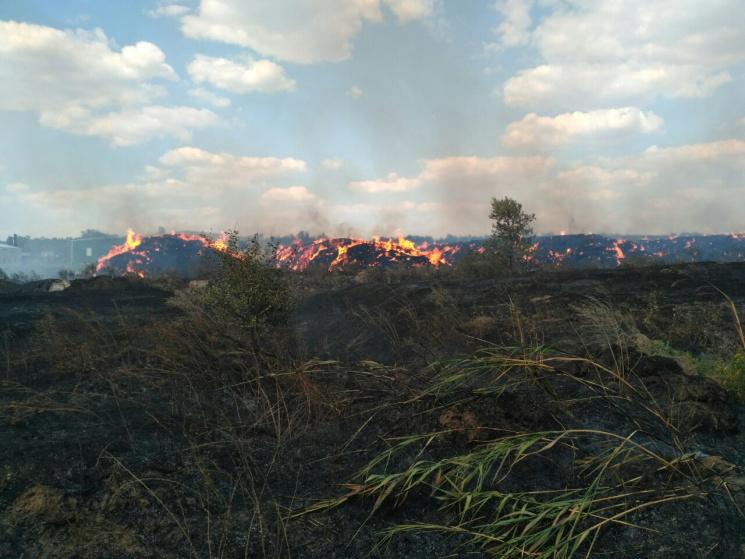 ВХарьковской области загорелись поле илес