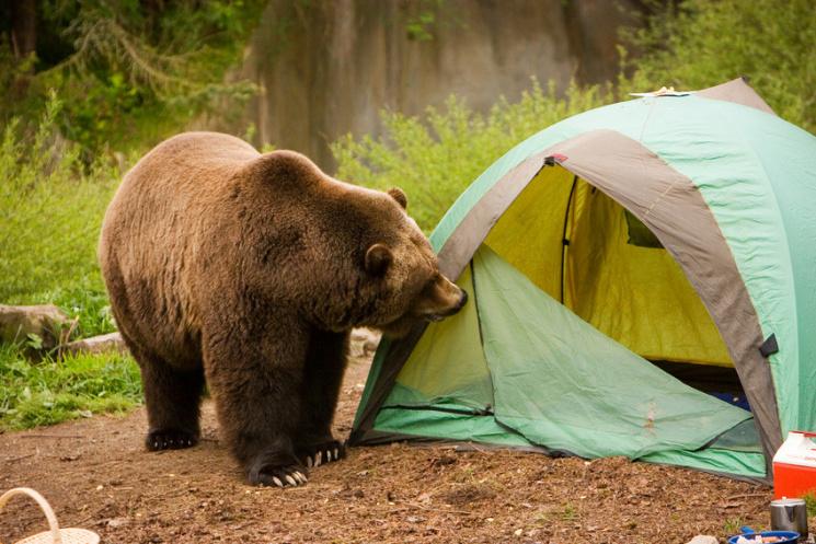 У Сочі ведмідь напав на наметове містечко