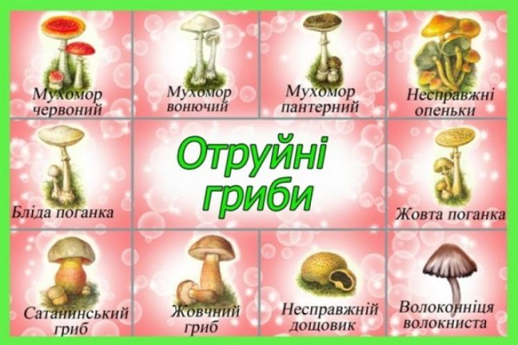 гриби рижики фото