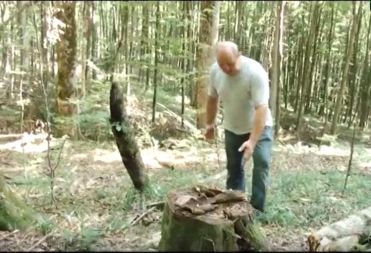 Карпати лисіють: В Ужанському нацпарку нещадно рубають ліс