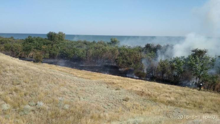 На Миколаївщині сталася лісна пожежа: Вогонь охопив площу у4,5 гектари (ФОТО)