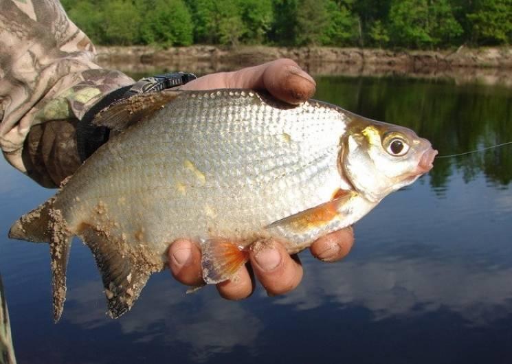 Карасі, окуні, гунтера: На Сумщині орудують рибні браконьєри