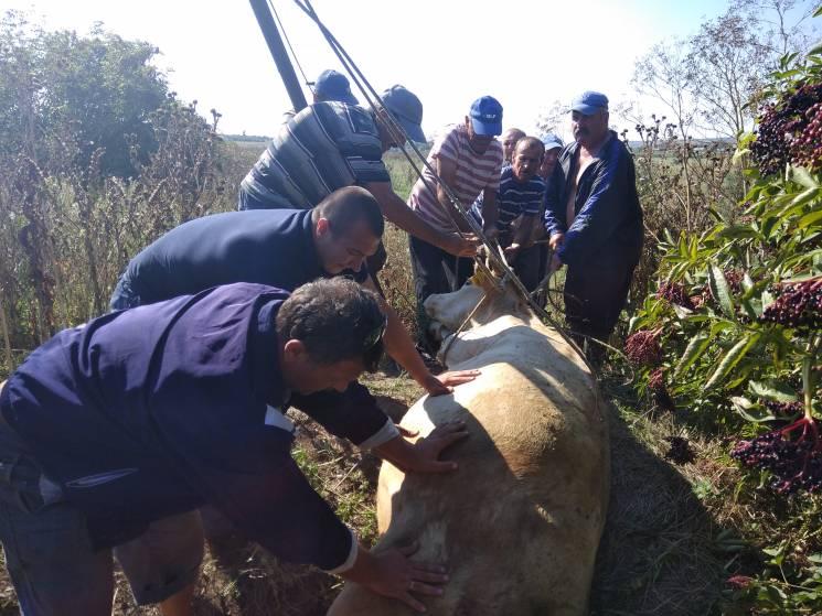 У Миколаєві рятувальники витягли корову з покинутого колодязя (ФОТО)
