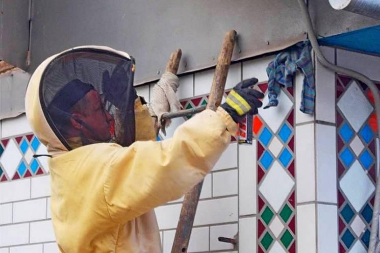 На Тернопільщині люди потерпають від небезпечних сусідів-комах (ФОТО)