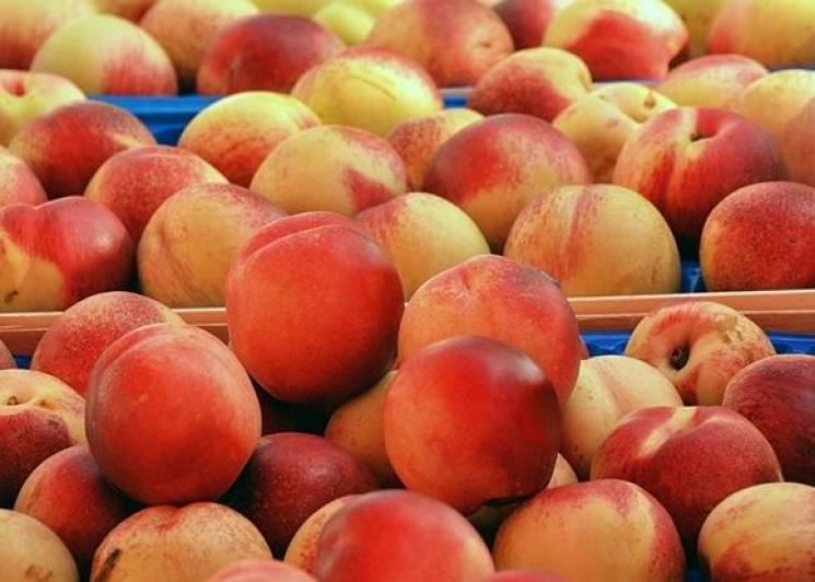 На Кубань заборонили ввезти заражені персики
