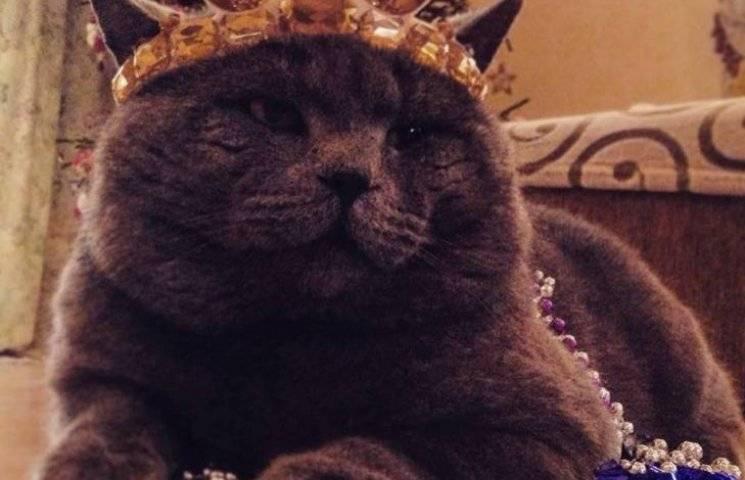 Чому закарпатські коти живуть, немов у Бога за пазухою
